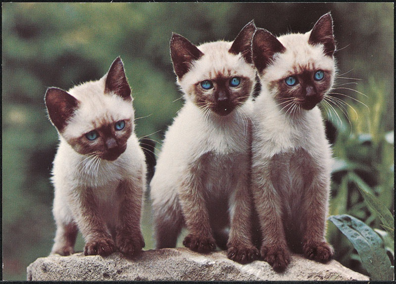 drie jonge katjes, gebruikt ter inspiratie voor het kinderboek: de puppies van snuffie