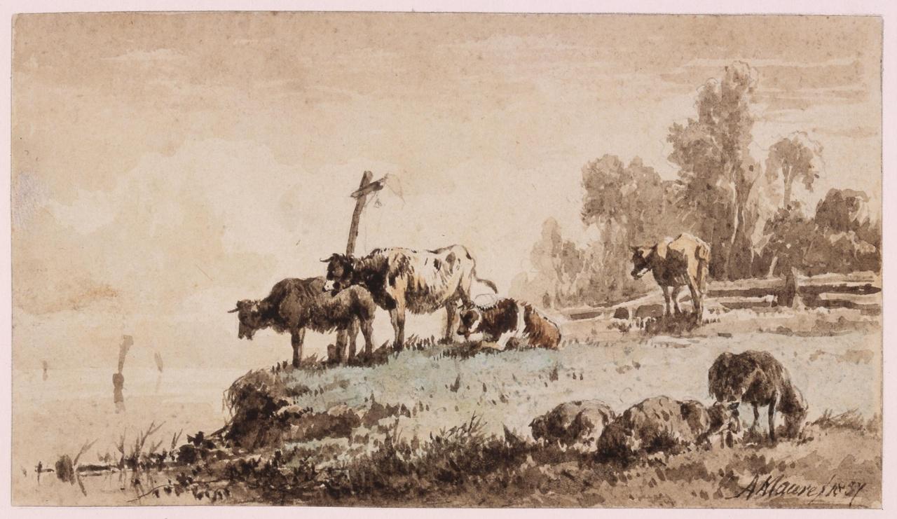 Weide met vee