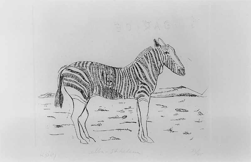 Elba - Sint Helena (Zebra)