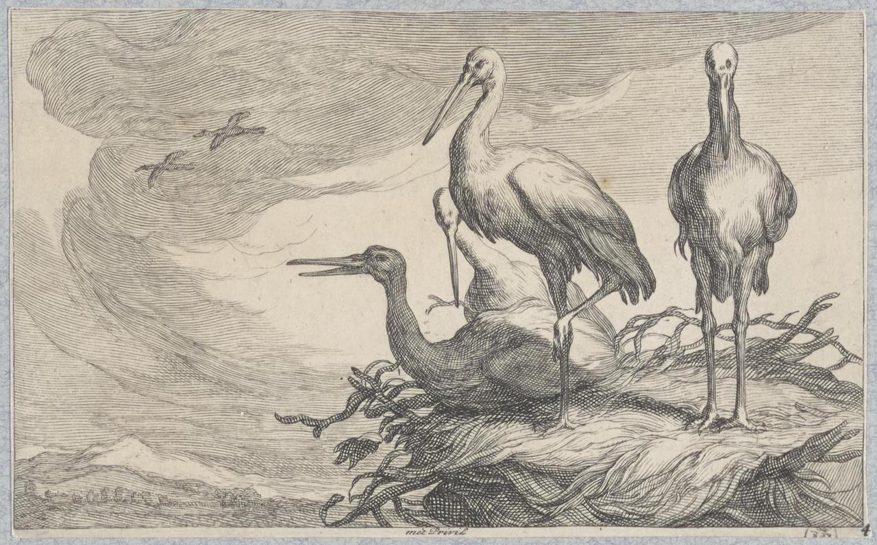 Vier ooievaars op het nest