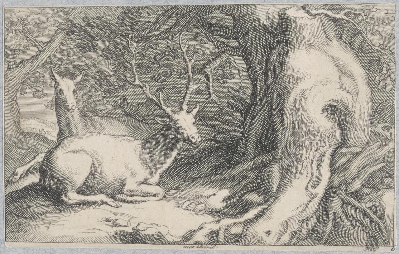 Liggend hert en een ree in een bos