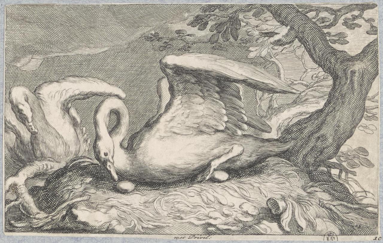 Twee zwanen bij het nest