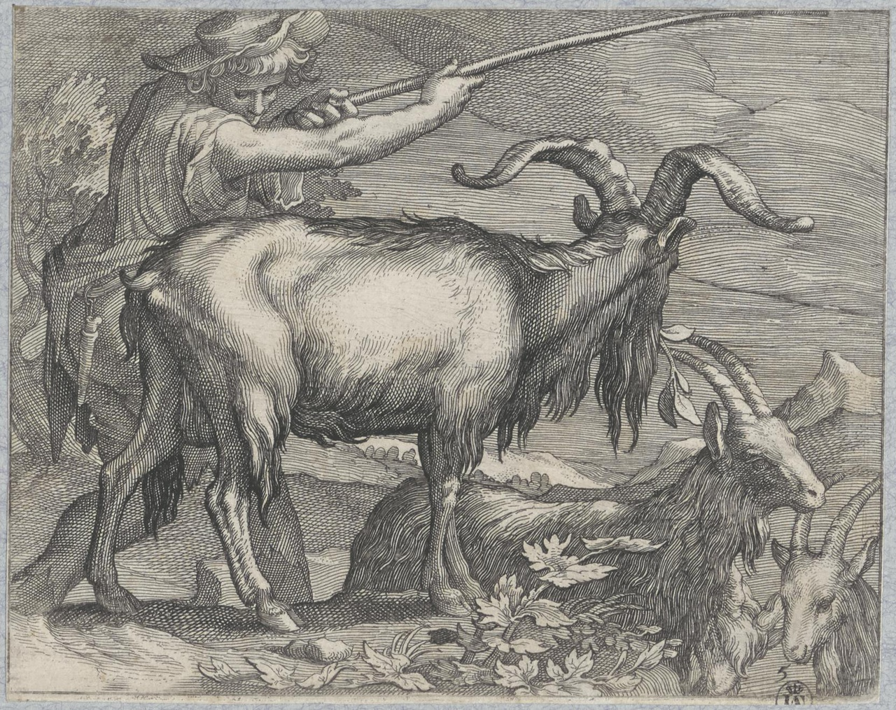 Herder, geiten opdrijvend met een stok