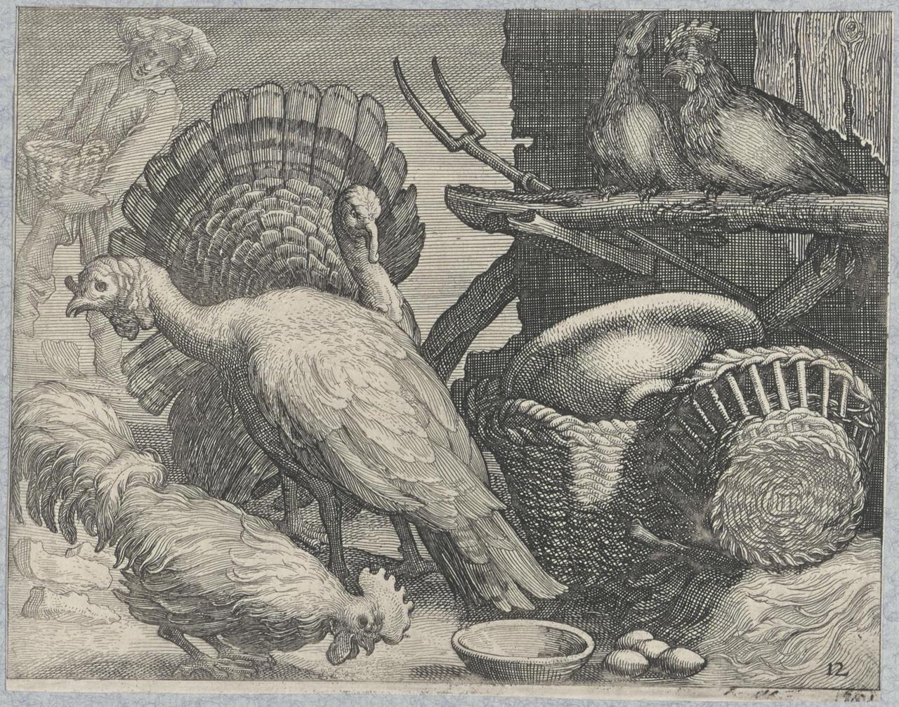 Kalkoenen, haan en kippen bij een stalmuur met manden en hooivork