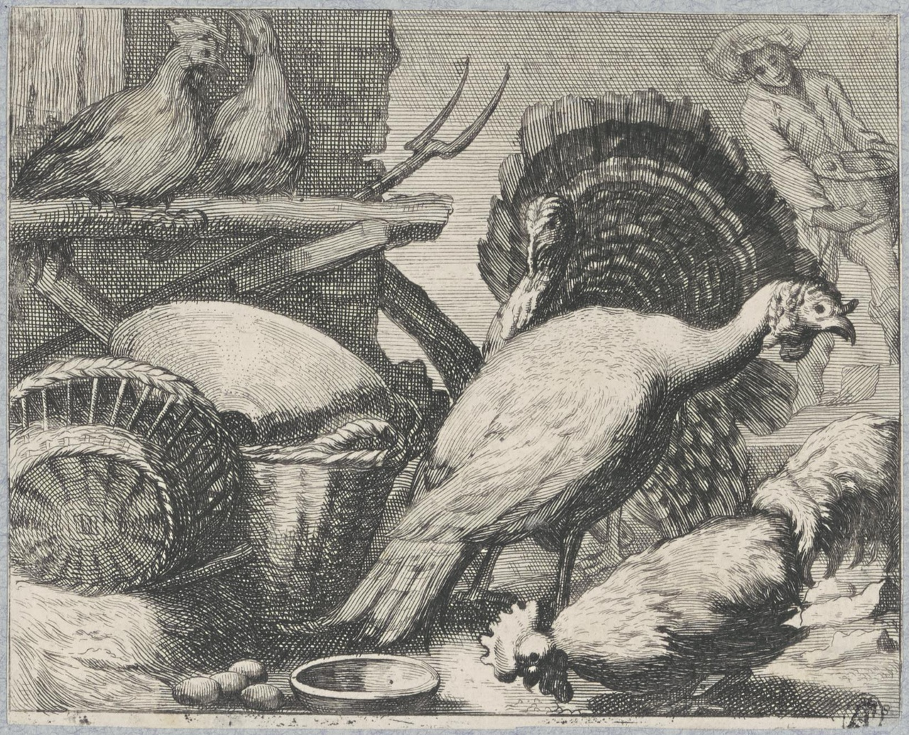 Kalkoenen, haan en kippen