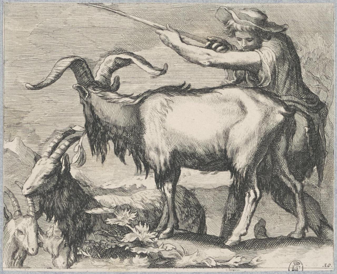 Herder met geiten