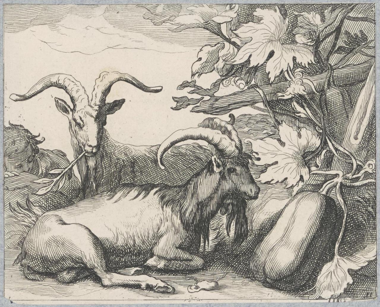 Twee liggende geiten