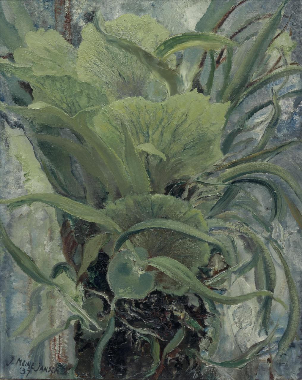Hertshoornplant