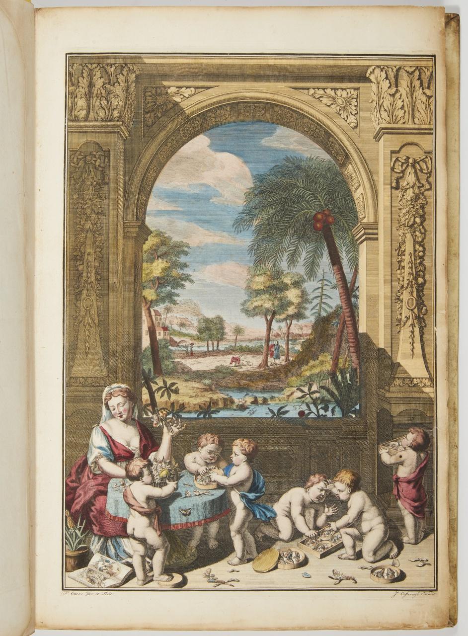 3/7 - Illustratie uit Dissertatio de generatione et metamorphosibus insectorum Surinamensium, 1719 (Amsterdam: J. Oosterwyk). Beeld via Christie's.