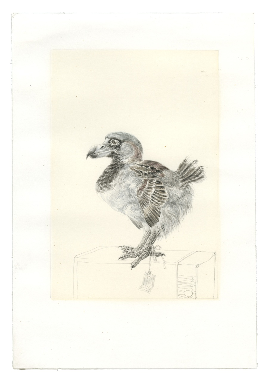 3/3 - Peter Vos, Dodo als mus